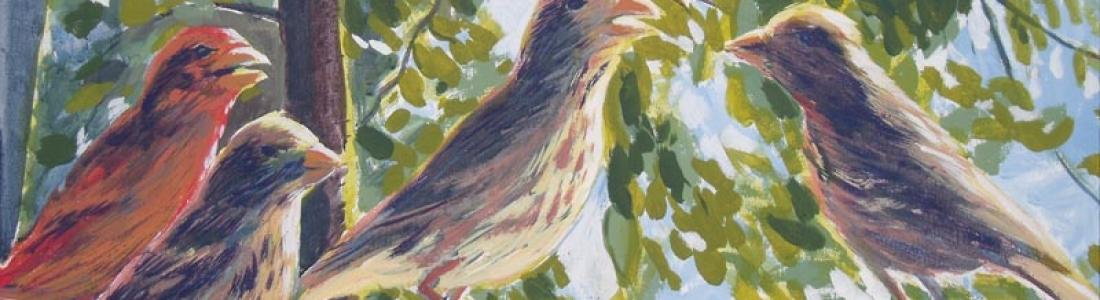 Grosbeaks eating seeds in newfoundland